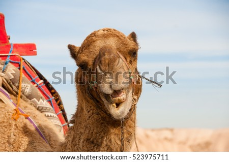 Camel close up against the sky