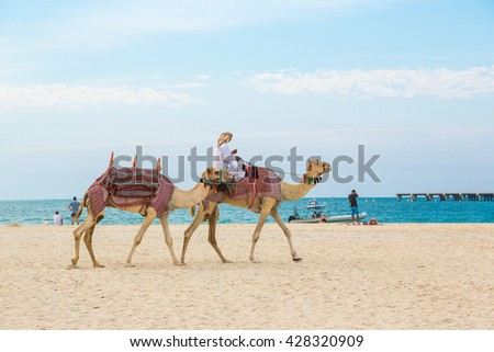 Camel in front of Dubai Marina in a summer day, United Arab Emirates