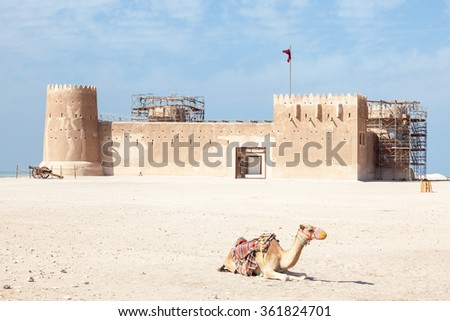 Camel in front of historic fort Zubarah (Al Zubara) in the North East of Qatar. Middle East, Arabia - stock photo