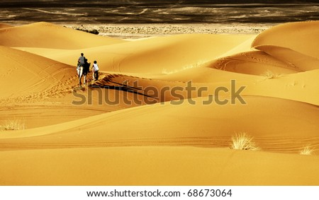 Camel in Sahara Desert, Africa - stock photo