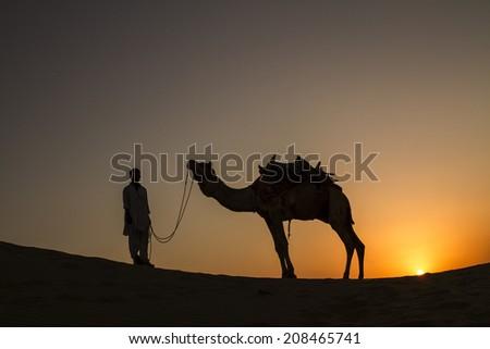 Camel in the desert  - stock photo
