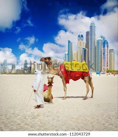 Camel on Dubai Beach, United Arab Emirates - stock photo
