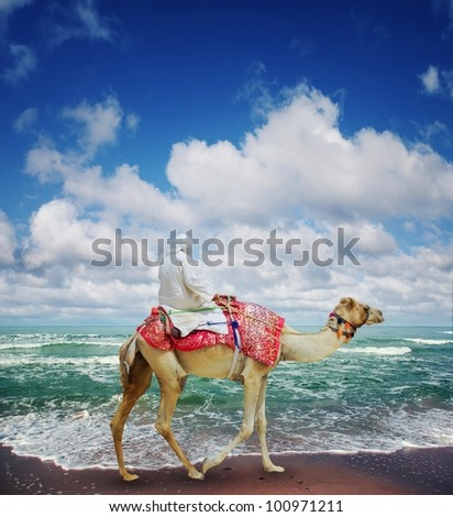"Camel on ""Jumeirah"" Beach - stock photo"