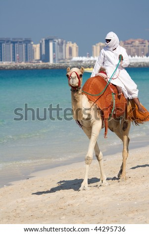 Camel on Jumeirah Beach in Dubai, UAE - stock photo