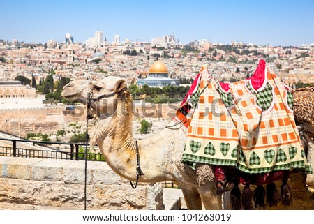 Camel on Mount of Olives and panoramic view on old Jerusalem, Israel - stock photo