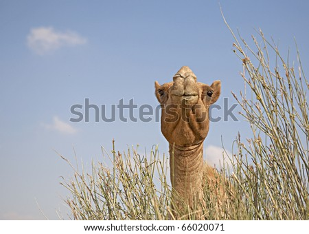 Camel's head in the grass - stock photo
