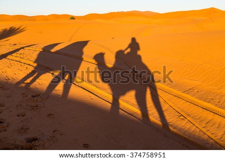 Camel shadow in the desert of Morocco