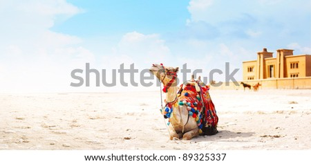 Camel sitting on a desert land with tower and blue sky on the background - stock photo