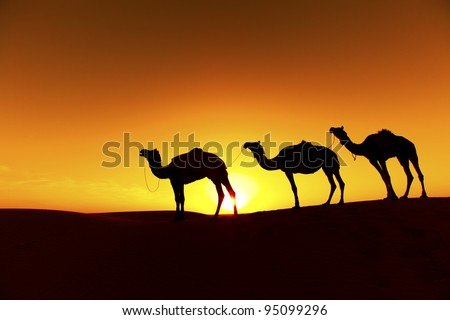 Camel train Silhouette on the Dunes of the Thar Desert, Rajasthan - India - stock photo