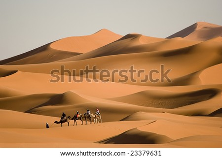 Camel trekking at Morocco - stock photo