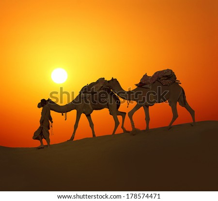 cameleer leading caravan of camels in desert - silhouette against sunset - stock photo