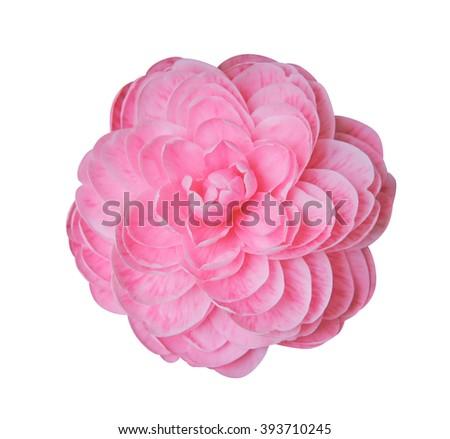 Camellia flower blossom Isolated on white background  - stock photo