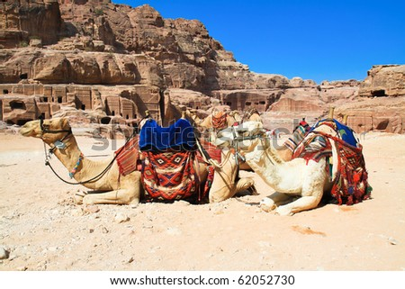 """Camels as """"air-conditioned taxis"""" in ancient city of Petra. It was carved out the rocks. It is now an UNESCO World Heritage Site. Petra, Jordan - stock photo"""