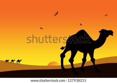 camels at sunset in the desert. - stock photo