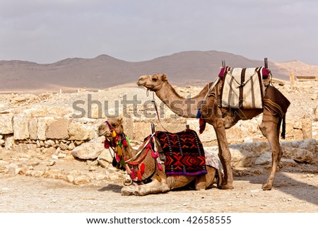 Camels in Ancient Roman time town in Palmyra (Tadmor), Syria. Greco-Roman & Persian Period.