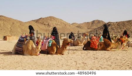 camels in desert, Egypt - stock photo