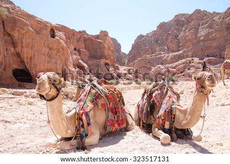 Camels in Petra - stock photo