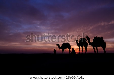 camels in the desert dusk - stock photo