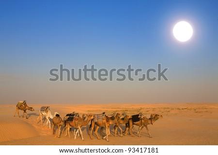 Camels in the sahara desert - stock photo