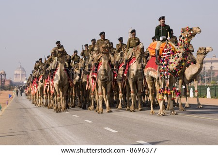 Camels of the Indian Army Camel Corps parading down the Raj Path in preparation for the Republic Day Parade, New Delhi, India