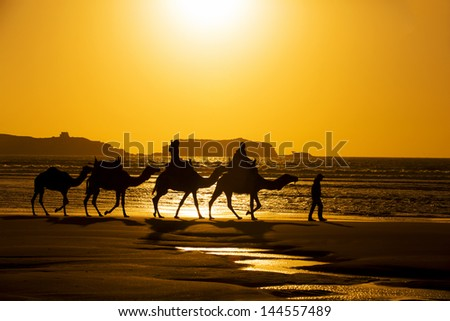 Camels on the beach at sunset in Essaouria, Morocco - stock photo