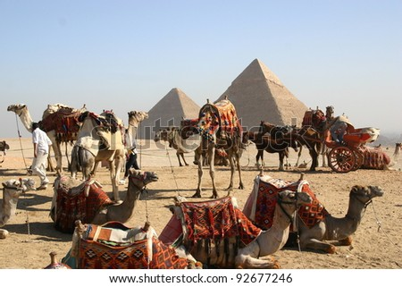 Camels resting near the great pyramid at Giza Egypt - stock photo