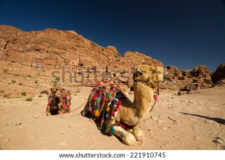 Camels resting opposite the Street of Facades in the archaeological site of Petra, Jordan. - stock photo