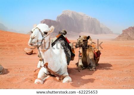 Camels take a rest in Wadi Rum red desert, Jordan - stock photo