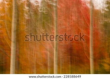 Camera movement results in a texture motion of fall trees as the wind blows the leaves in Western North Carolina. - stock photo