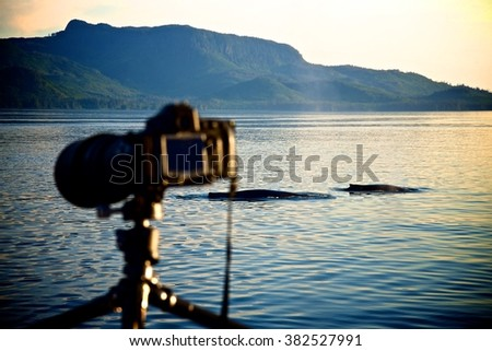 Camera with the Whale Back - stock photo