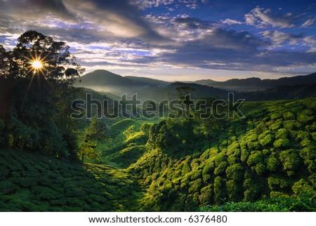 Cameron Highland tea plantation shine by the morning sun and foggy - stock photo