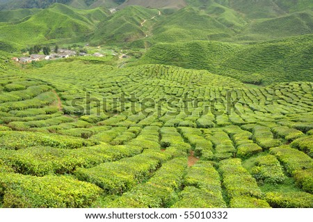 Cameron Highlands - stock photo