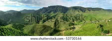 Cameron panorama, Malaysia - stock photo