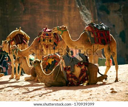 Camesl caravan in the desert - stock photo