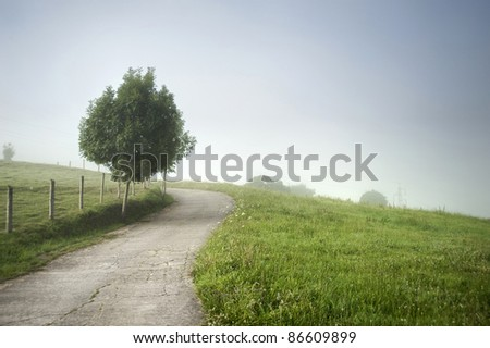 Camino con árbol y niebla y curva - stock photo