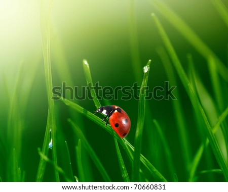camomile flower in grass - stock photo