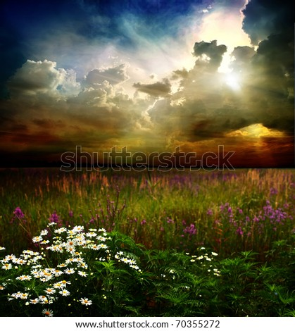 Camomiles and wild flowers against the sky - stock photo