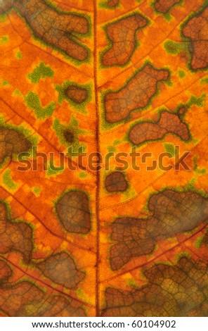Camouflage leaf background - stock photo