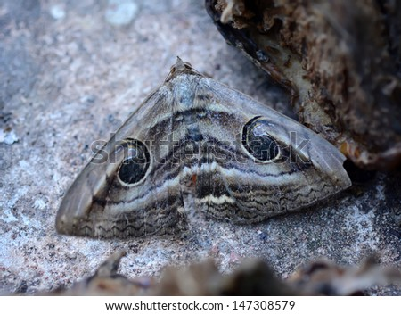 Camouflage of a butterfly on the ground - stock photo