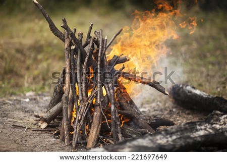 Camp fire in the forest - stock photo