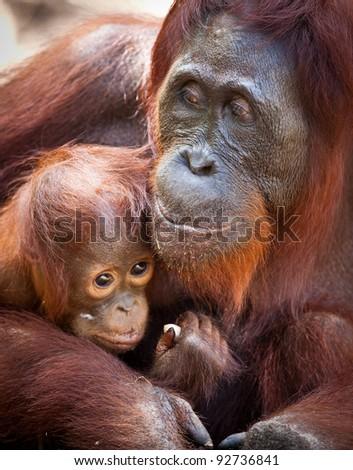 Camp Leakey Rehabilitation Center, Kalimantan - stock photo
