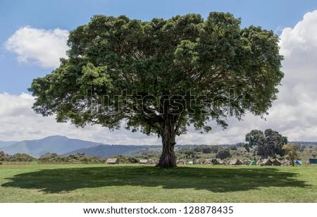 Camp of tourists in the Crater Ngorongoro near big tree - Tanzania, Eastern Africa - stock photo