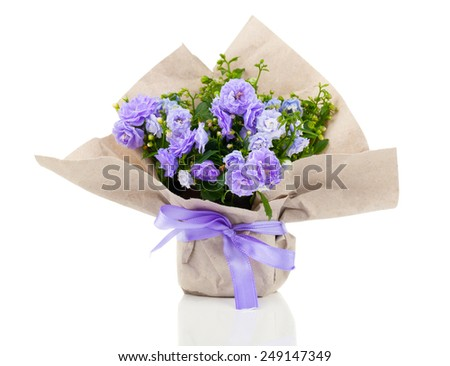 Campanula terry with blue flowers in paper packaging, isolated on white background - stock photo