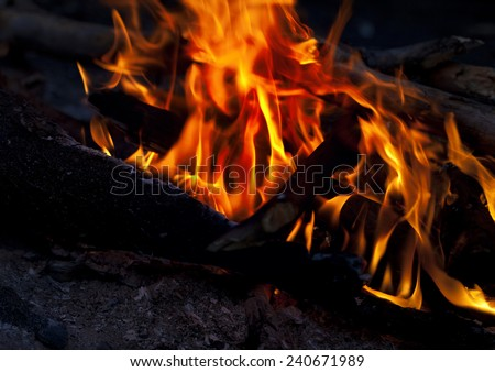 Campfire in forest at night - stock photo