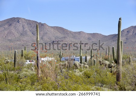 Camping between Saguaro cactus, Arizona, USA - stock photo