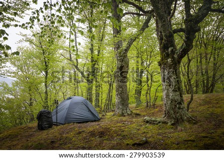 Camping equipment. Tent in the spring forest - stock photo
