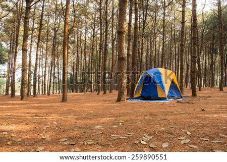 Camping in tents in the pine forests mountains. - stock photo