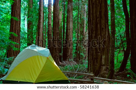 camping near the redwood forest - stock photo