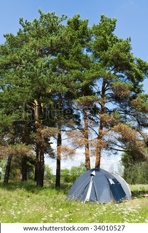 Camping on a wild field near to high pines - stock photo