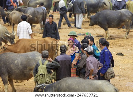 CAN CAU, VIETNAM - OCTOBER 24: Unidentified woman of the Flower H'mong People at the water buffalo market on October 24, 2014 in Can Cau, Vietnam. H'Mong are the 8th largest ethnic group in Vietnam - stock photo
